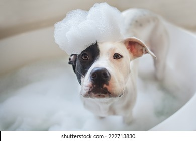 Puppy gets a bubble bath