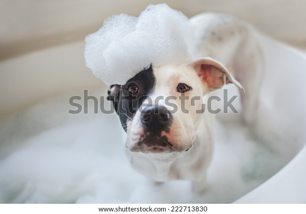 Puppy gets a bubble bath