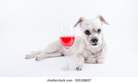 Puppy with a glass of wine on white