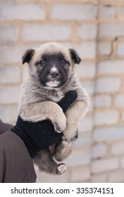 puppy in her arms, puppy orphan, black dog