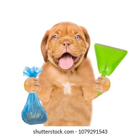 Puppy holds plastic bag and scoop. Concept cleaning up dog droppings. isolated on white background