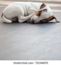 Puppy at home. Dog sleeping at warm floor. Pet