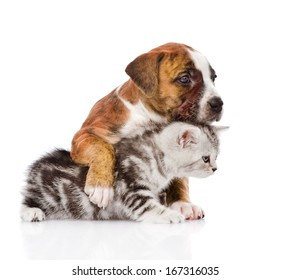 puppy hugs scottish kitten. isolated on white background