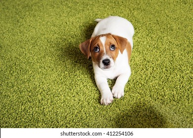 Bad Puppy Images Stock Photos Amp Vectors Shutterstock