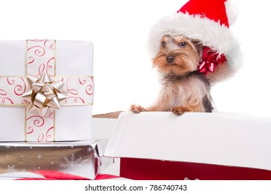 A puppy jumps out of a gift box as a Christmas present