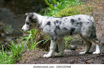 Puppy Kairi, in the glen on the Isle of Man