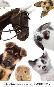 Puppy and kitten and guinea pig and  horse and rat