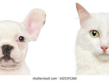 Puppy and Kitten half face, Isolated on white background. Baby animal theme