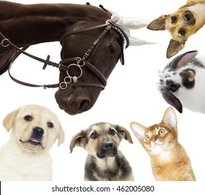 Puppy and kitten  and  horse and rat