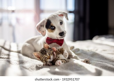 Puppy and kitten hugging on the bed as a best friends