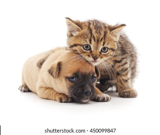 Kitten And Puppy Images Stock Photos Vectors Shutterstock