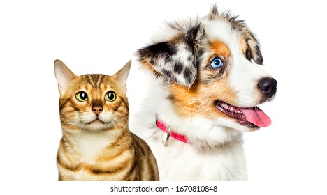 puppy and kitten are looking nearbyon white background