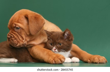 Puppy and kitten on a green backgrounds.
