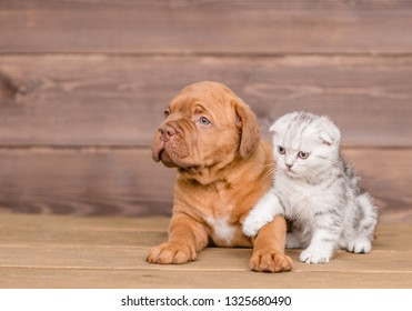 Puppy with kitten on wooden background. Empty space for text