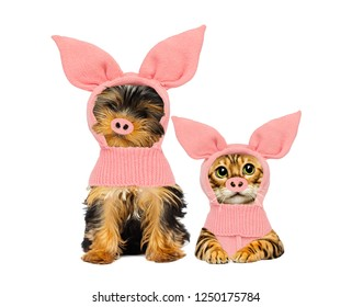 puppy and kitten in pig costume, the symbol of the new year 2019