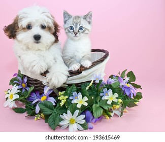 Puppy and kitten sitting in a basket with flowers around them with copy space.