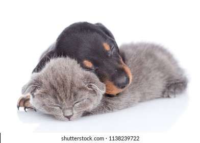 puppy and kitten are sleeping together.  isolated on white background