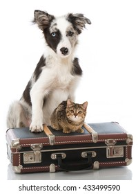 Puppy and kitten with suitcase