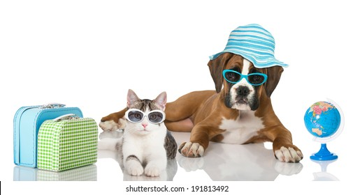 Puppy and kitten with suitcase and  beach umbrella