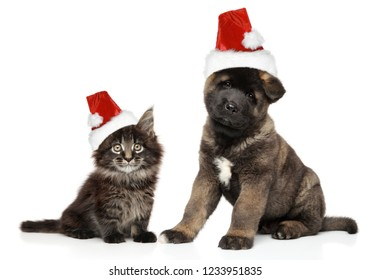 Puppy and kitten together in Santa hats on white background