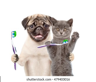Puppy and kitten with toothbrushes. isolated on white background