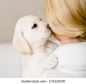 Puppy of Labrador kisses the face of woman in white sweater