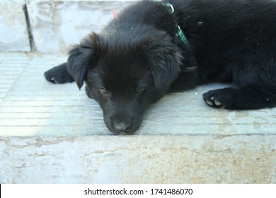 A puppy laying on the stone step