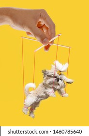 Puppy like a puppet in somebodies hands on yellow background. Concept of unfair manipulation, phycology of exploitation, mental technique, motivation. Puppets and their masters. Possessive