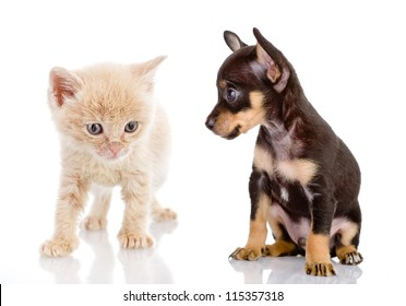 the puppy looks at a kitten. isolated on white background