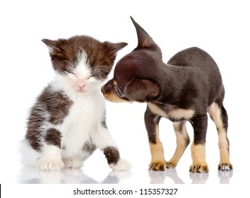 the puppy looks at a kitten. Isolated on a white background