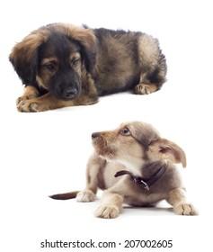 puppy looks sideways