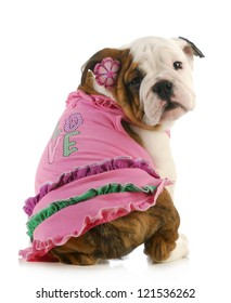 puppy love - english bulldog wearing pink shirt that says love on white background