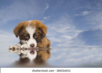 puppy lying on blue sky background water lapping