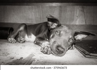 puppy lying on the ground black and white tonbe