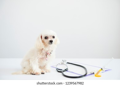 Puppy with medical equipment on white background