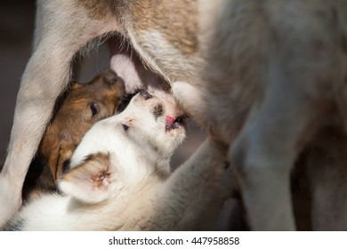 Puppy milk, wild nature.