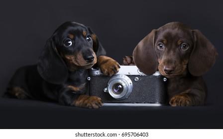 puppy and old analog retro photo camera