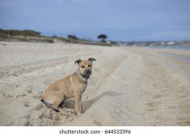 A puppy on the beach