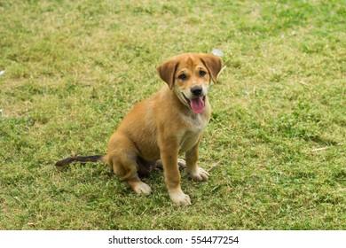 Puppy on yard.