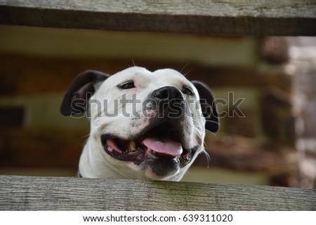 Puppy Overwatch