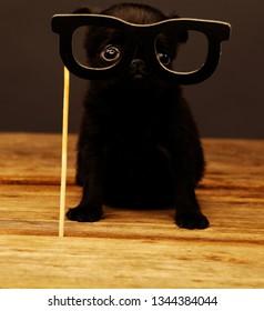 puppy paper black glasses