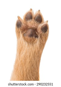 puppy paw on a white background