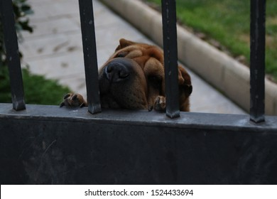 Puppy peeking over a fence