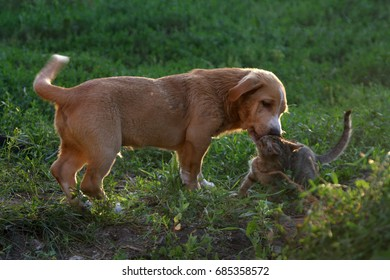 Puppy playing with a kitten