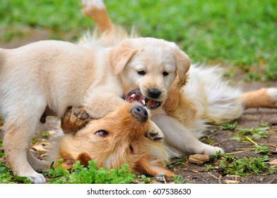 Puppy playing mom