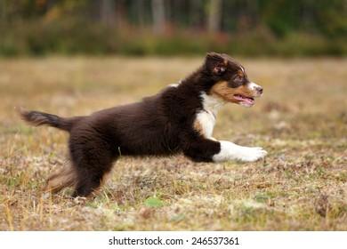 puppy running on the grass