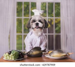 puppy shih tzu prepares delicious healthy lunch
