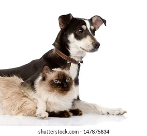 puppy and siamese cat together. isolated on white background
