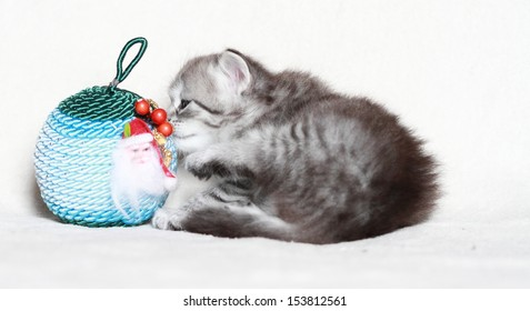 puppy of siberian cat with a christmas ball