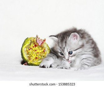 puppy of siberian cat with christmas decoration